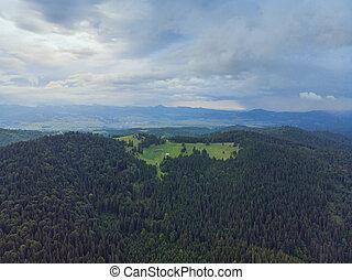 felülnézet, közül, zöld erdő