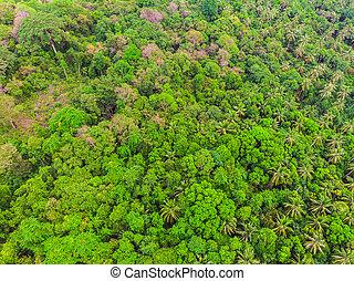 felülnézet, közül, zöld fa, alatt, a, erdő