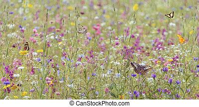 feld, mit, frühjahrsblumen, und, vlinders