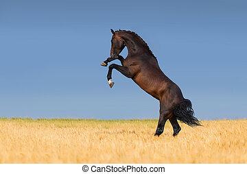 feld, pferd, getreide