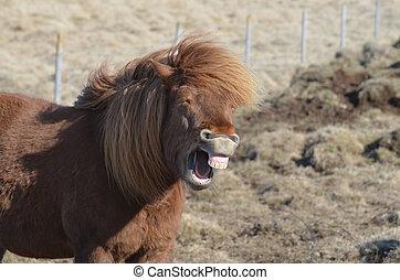 feld, pferd, lachender