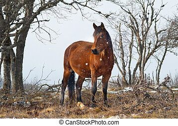 feld, pferd, rotes
