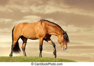 feld, pferd