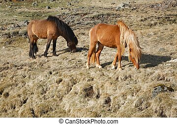 feld, pferd streifen