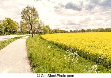 feld, von, gelbe blüten, in, a, schöne , landschaft