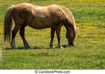 feld, weiden, rotes pferd