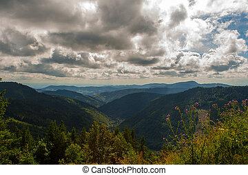 feldberg, alemanha, floresta, paisagem, pretas
