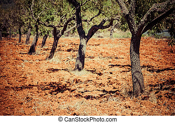 felder, gartenerde, insel, ibiza, landschaftsbild, tonerde, landwirtschaft, rotes