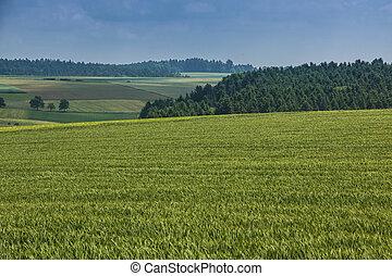 felder, hoch, grüner wald, hintergrund, groß, korn