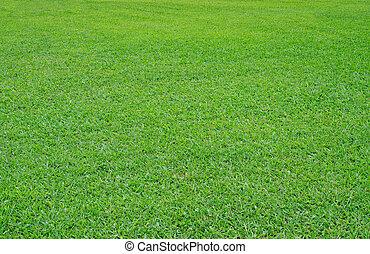 feldgras, grün