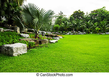 feldgras, park, grün