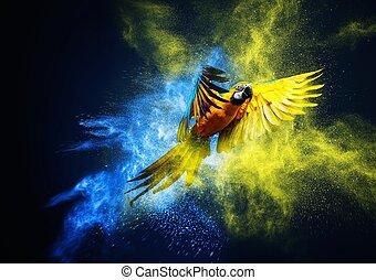 felett, papagáj, ara, felrobbanás, por, repülés, színpompás