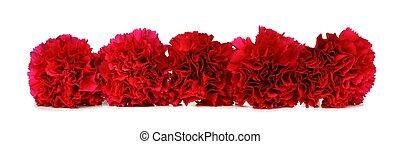 felett, szegfű, white virág, határ, piros