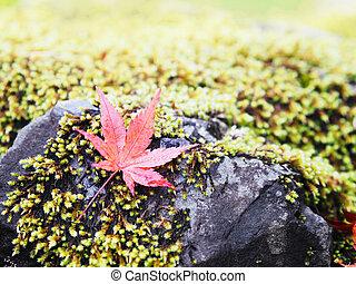 felett, zöld, ground., juharfa, esés, moha, zöld, piros