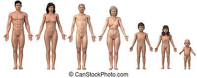 felhasználható, család, kép, -, felsőtest, anatómiai, is,...