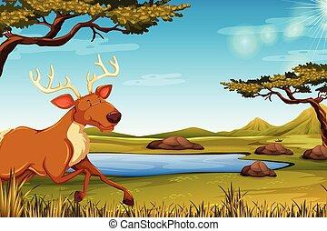 felice, cervo, natura
