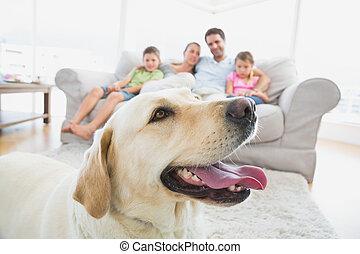 felice, divano, famiglia, seduta