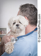 felice, veterinario, presa a terra, uno, poco, cane