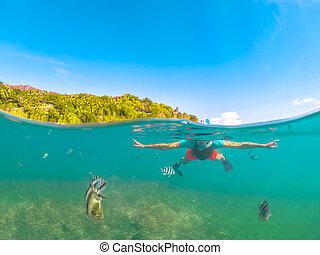 felicite, fente, snorkeling, vue