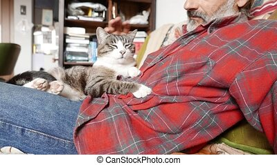 feline friend - cat and man friendship on the couch