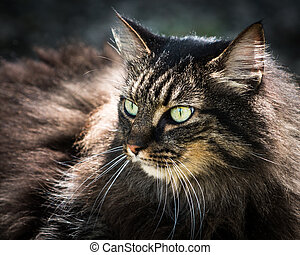 Feline in Sunshine II