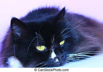 Feline muzzle lying and sleeping. Cat close up
