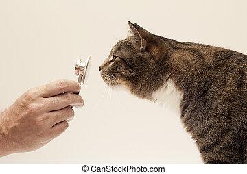 felino, cuidados de saúde