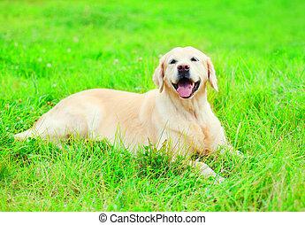 feliz, alegre, perro cobrador dorado, perro, es, acostado, reclinación encendido, el, pasto o césped, en, un, soleado, día de verano