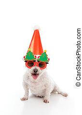 feliz, cão, parte christmas