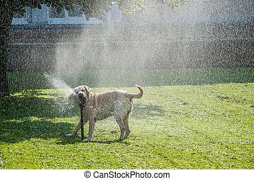 feliz, cão, play-2