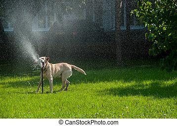 feliz, cão, play-5