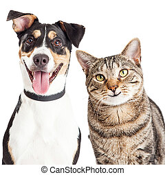 feliz, closeup, cão, junto, gato