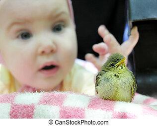 feliz cumpleaños, birdy