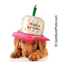 feliz cumpleaños, perrito