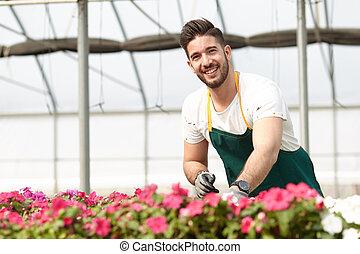 feliz, macho, berçário, trabalhador, aparando, plantas, em, estufa