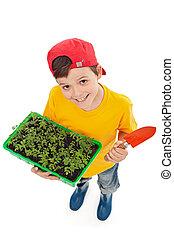 feliz, menino, pronto, para, planta, primavera, seedlings