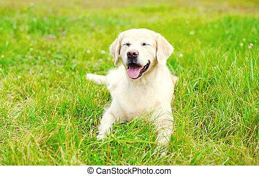 feliz, perro cobrador dorado, perro, acostado, reclinación encendido, pasto o césped, en, día de verano