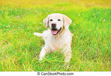 feliz, perro cobrador dorado, perro, yacer césped, en, día de verano