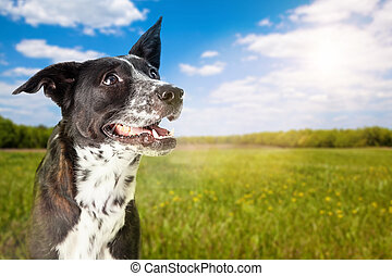 feliz, perro, en, parque, en, día soleado