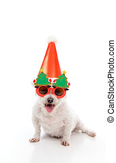 feliz, perro, fiesta de christmas