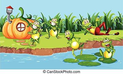 feliz, río, rana, luego