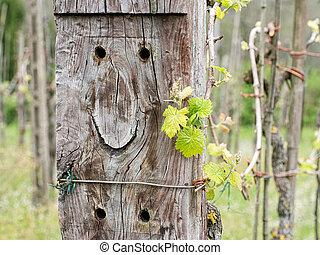 feliz, vineyard., a, antigas, dormente, seems, para, desgaste, um, smile.