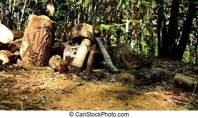 felled, bäume, in, der, forest., 82