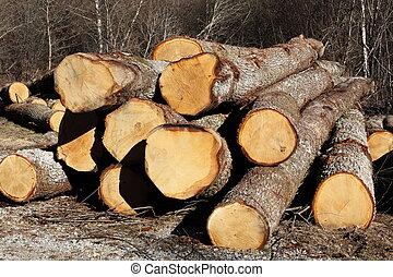 Felled Oak Tree Trunks - Longitudinal view along the length...