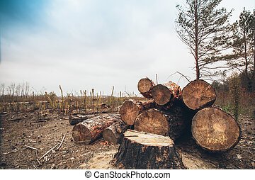 felled timber in the forest - Logs trees after logging,...