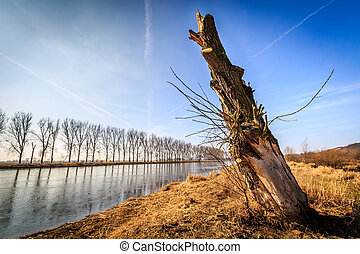 Felled tree by the river