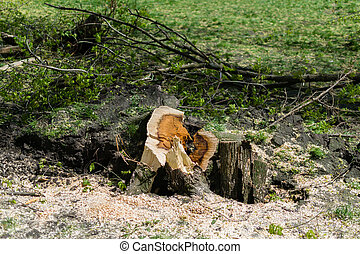 Felled tree stump in the grass nature