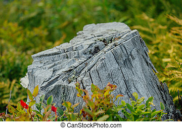 Felled tree trunk. Tree stump in a summer forest.