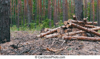 Felled Tree Trunks in the Forest. Cut logs are stacked in a...
