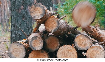 Felled Tree Trunks in the Forest. Folding logs felled into a...